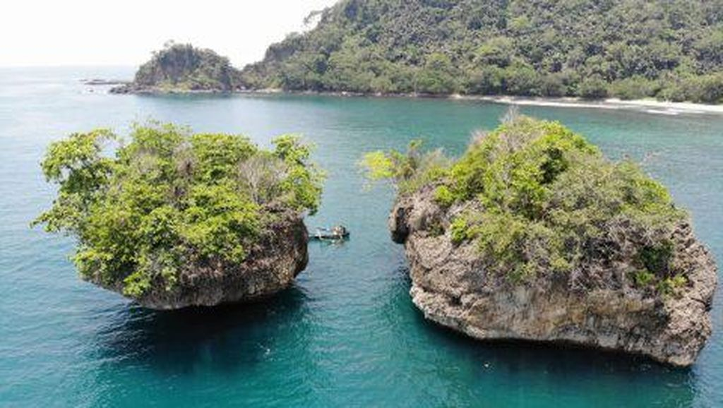Tentang Bunga Wijayakusuma dari Nusakambangan, Pelengkap Penobatan Raja Jawa