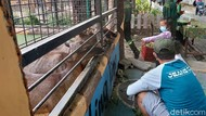 Akhir Pekan, Kebun Binatang Surabaya Ramai Dikunjungi Warga