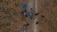 Antusias Anak-anak di Inggris Panen Labu Jelang Halloween