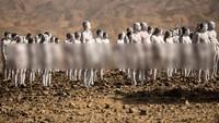 Ratusan Pria dan Wanita Telanjang Bulat di Gurun Israel, Ada Apa?