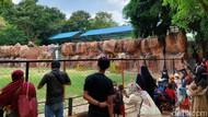 Kebun Binatang Surabaya Diserbu Pengunjung saat Akhir Pekan