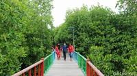Intip Taman Wisata Mangrove Pertama di Papua