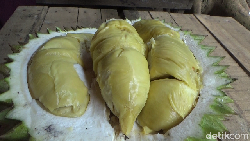 Legit Creamy Durian Mentega dari Lereng Gunung Semeru yang Bikin Nagih