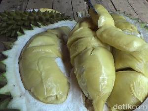 Menikmati Legitnya Durian Mentega dari Lereng Semeru