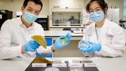 Keren! Ilmuwan Singapura Sulap Sampah Durian Jadi Plester Luka