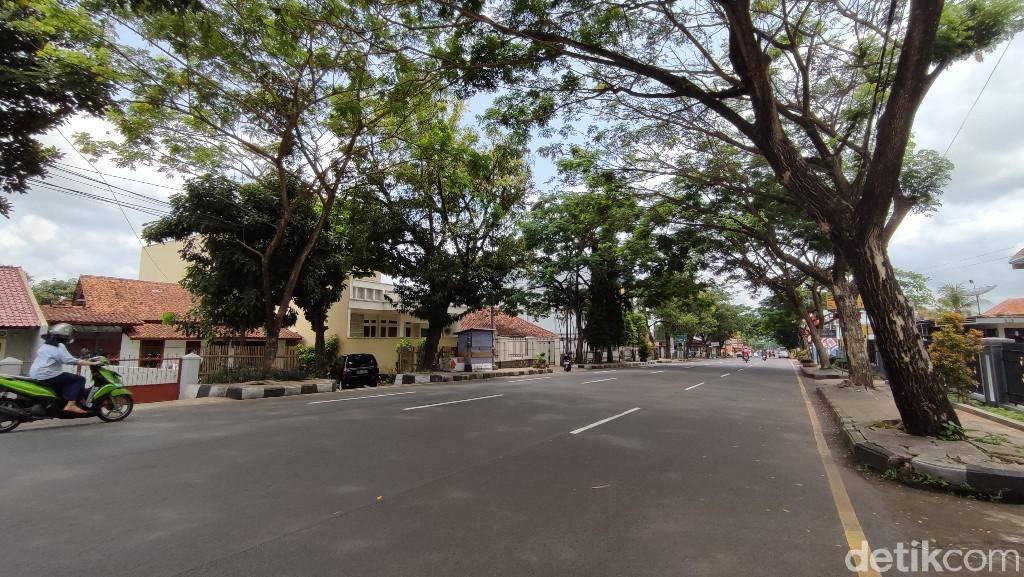 Rawan Tumbang, Pohon Trembesi di Pinggir Jalan Ciamis Akan Diganti