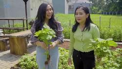 Prilly Latuconsina Senang Bisa Panen Pakcoy dan Bayam di Rumahnya