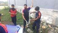 Warga Lamongan Kaget Temukan Sarang Ular Kobra Saat Bersih-bersih