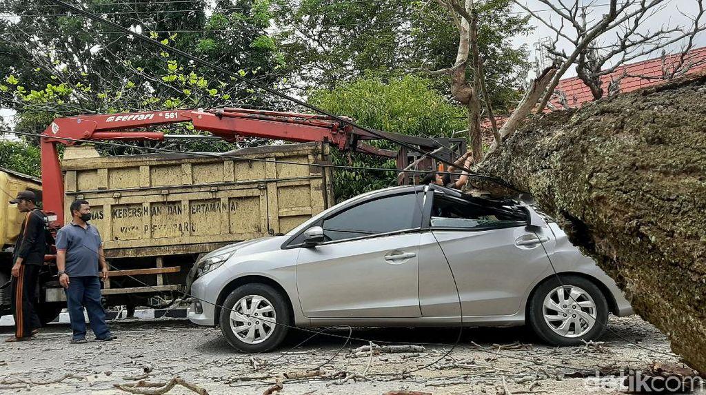 Braaak...! Mobil di Riau Ini Ringsek Ketimpa Pohon