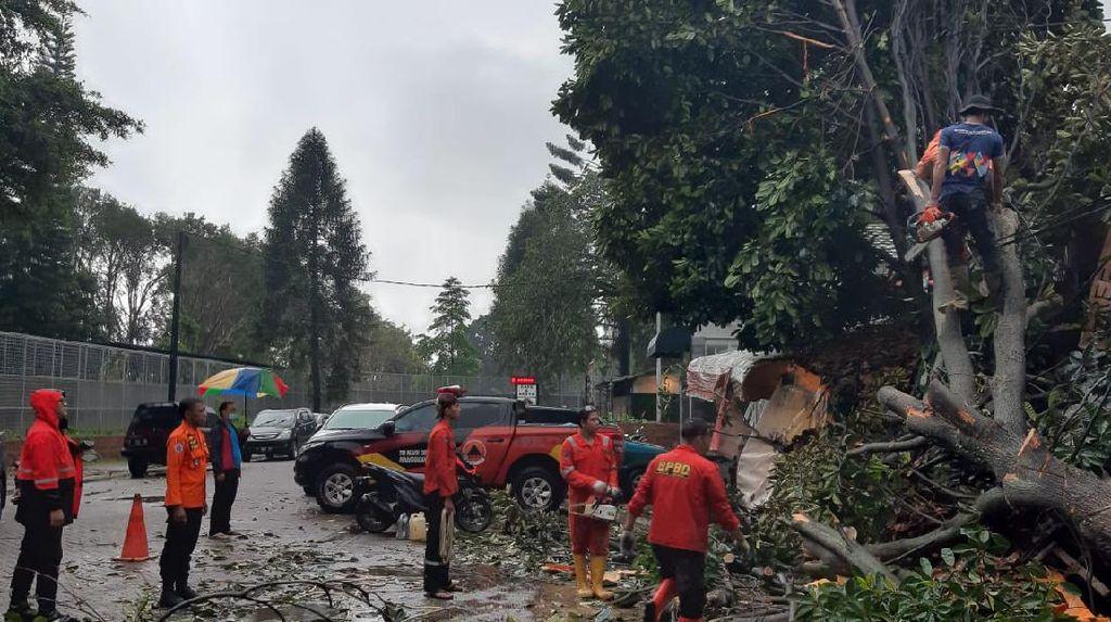 Hujan Angin, Pohon Tumbang Timpa Dua Mobil di Bogor