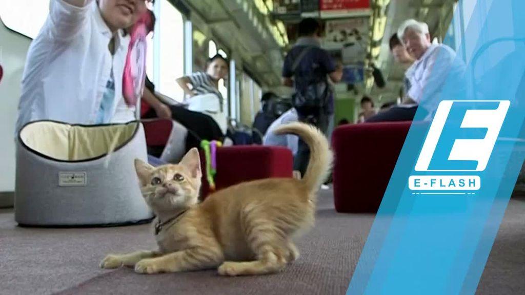 Ada Kereta Kafe Kucing Pertama di Jepang