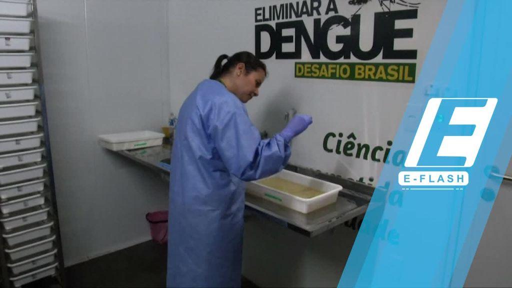 Ilmuwan Brasil Ciptakan Nyamuk Antibodi DBD
