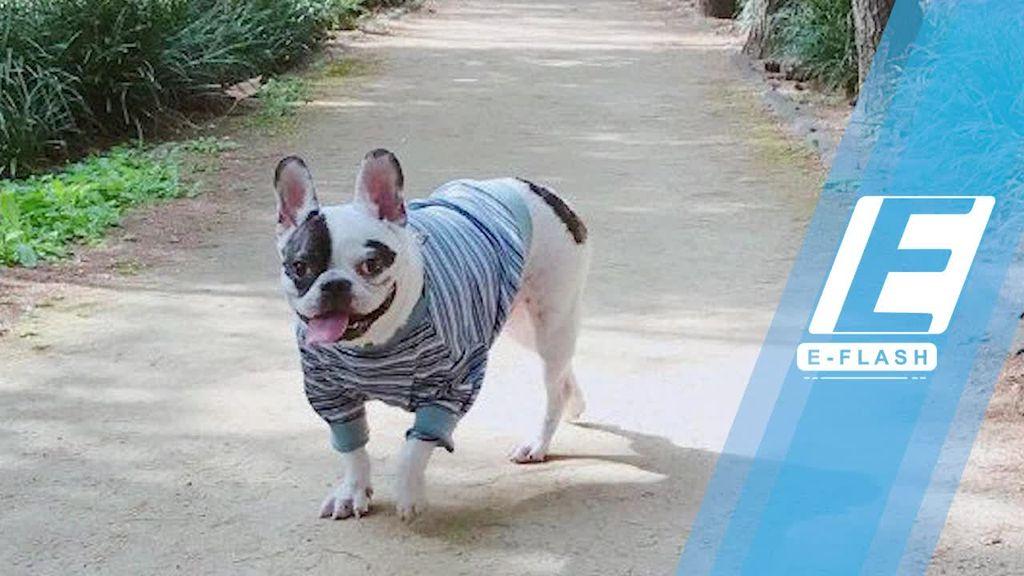 Anjing Siwon Juga Pernah Gigit Leeteuk Super Junior