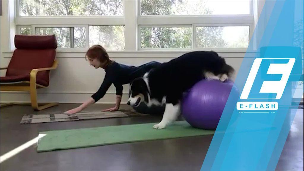 Serunya Yoga Bareng Hewan Kesayangan!