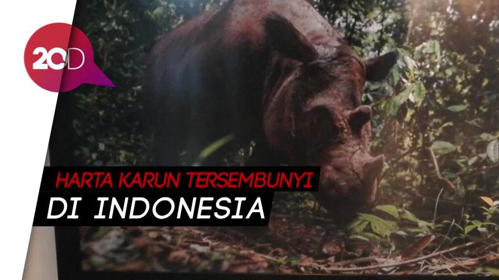Bantu Lestarikan Badak Sumatera Melalui Pameran dan Lelang Amal