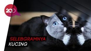 Gemas! Kenalkan Ini Narnia Si Kucing Bermuka Dua