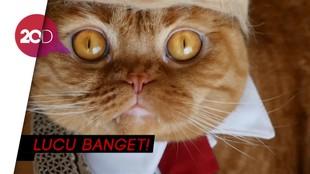 Gemas! Kucing Jepang Ini Pakai Wig Gaya Donald Trump