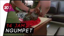 Detik-detik Penangkapan Macan Tutul di Kolong Rumah Warga
