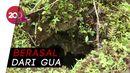 Ini Lokasi Sarang Ular Sanca yang Makan Wanita di Sultra