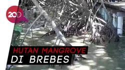 Berkunjung ke Dewi Mangrove Sari