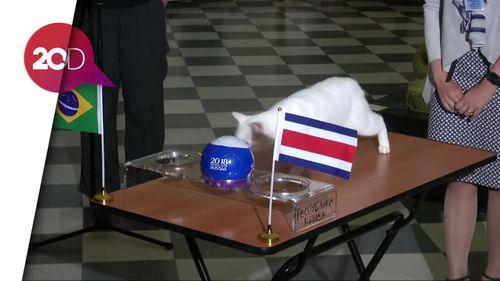 Kini Kucing Achilles Ramal Brasil Kalahkan Kosta Rika