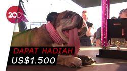Guk! Ini Zsa Zsa, Pemenang Kontes Anjing Terjelek Sedunia