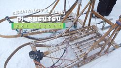 Dog Sledding, Kereta Salju yang Ditarik oleh Anjing
