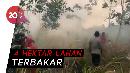 Petugas Berjibaku Padamkan Api di Lahan Gambut Jambi