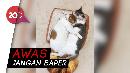 Romantisnya Cara Kucing Ini Tunjukkan Kasih Sayangnya