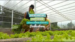 Menyantap Sayuran Hasil Panen Sendiri Ternyata Menyenangkan