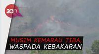 Tujuh Hektare Hutan di Trenggalek Ludes Terbakar!