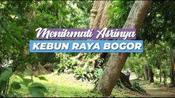 Menikmati Asrinya Kebun Raya Bogor