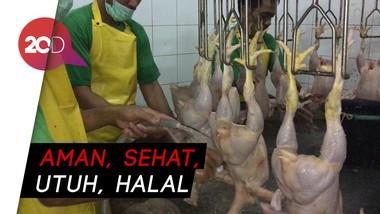 Hindari Flu Burung, Ini Tahapan Produksi Ayam ASUH