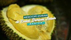 Mencicipi Durian Langsung di Kebunnya