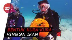 Jelang Halloween, Para Scuba Diving Ini Adu Ukir Labu