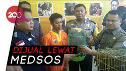 Polisi Tangkap Pelaku Penjual Satwa Lindung