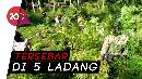 235 Ton Ganja di Aceh Dimusnahkan