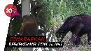 Kukang hingga Beruang Madu Dilepasliarkan di Riau