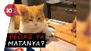 Kocak! Kepo Sama Bawang, Kucing Ini Malah Banjir Air Mata