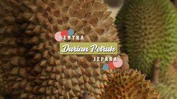 Berburu Durian di Sentra Durian Petruk, Jepara