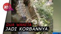 Kawanan Buaya Bikin Was-was Warga Riau dan Sumut