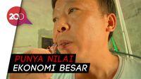 Di China, Kecoa Jadi Bisnis yang Menggiurkan