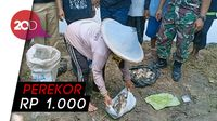 Di Ngawi, Petani Lomba Tangkap Tikus Sawah