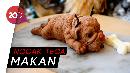 Cake Berbentuk Anjing dan Kelinci Ini Bikin Gemas!