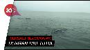 Libur Tahun Baru, Yuk Berenang Bareng Hiu Tutul di Pasuruan!