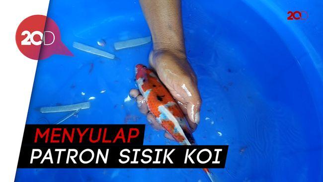 Unduh 41 Gambar Ikan Koi Di Jalan HD Terpopuler
