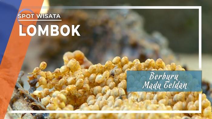 Berburu Madu Teldan Lombok Utara, Nusa Tenggara Barat