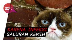 Grumpy Cat Si Kucing Terkenal Meninggal Dunia