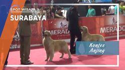 Kontes Anjing di Surabaya