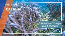 Konservasi Penyu dan Terumbu Karang Laut Calabai di Sumbawa